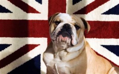 UnionJack+Bulldog